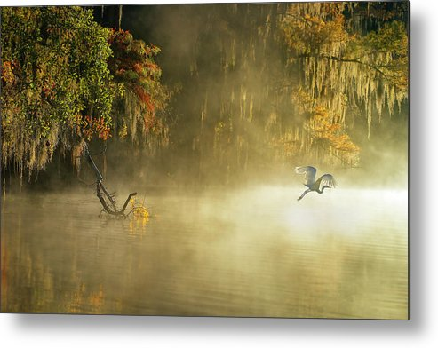 Caddo Metal Print featuring the photograph Egret by Hua Zhu