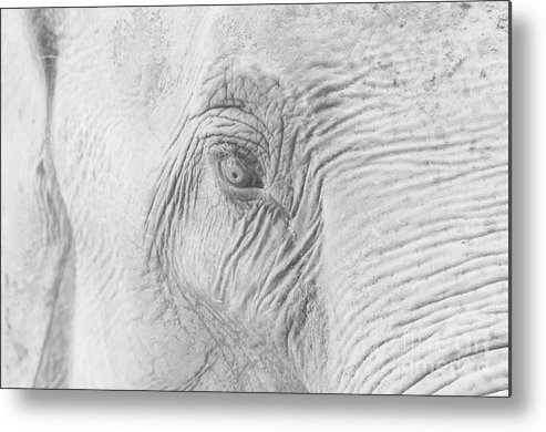Elephant Metal Print featuring the photograph Elephant Eye by Steev Stamford