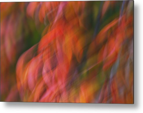 Emotion Metal Print featuring the photograph Emotion In Color by Rachel Cohen