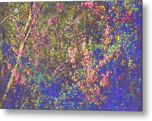 Enchanted Wood Metal Print featuring the photograph Enchanted Wood II by Suzanne Powers