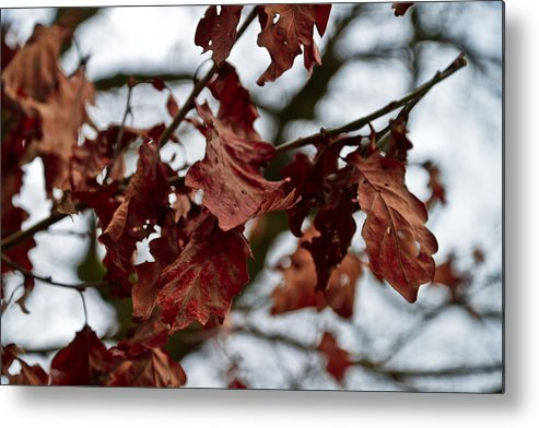 Leafs Metal Print featuring the photograph End Of A Cycle by Tino Lopes