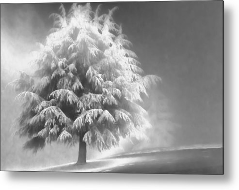 Beauty Metal Print featuring the photograph Enlightened Tree by Don Schwartz