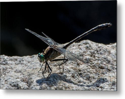 Dragonfly Metal Print featuring the photograph Envy by Bryan Neuswanger