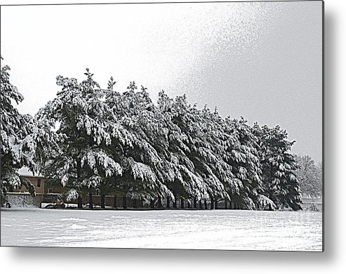 Illinois Metal Print featuring the photograph Evergreens In Snow by Luther Fine Art