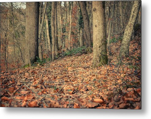 Woods Metal Print featuring the photograph Expectation by Taylan Apukovska