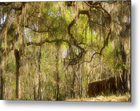 Spanish Metal Print featuring the photograph Fabulous Spanish Moss by Christine Till