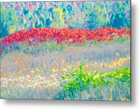Nature Metal Print featuring the photograph Fall Field by Gwendolyn Christopher