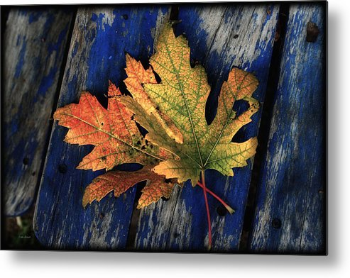 Nature Metal Print featuring the photograph Falling For Colour by Linda Sannuti