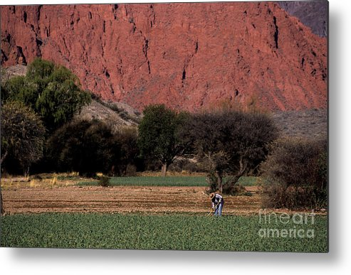 Argentina Metal Print featuring the photograph Farmer In Field In Northern Argentina by James Brunker