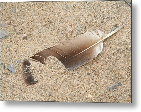 Feather Metal Print featuring the photograph Feather On The Beach by Bob and Jan Shriner
