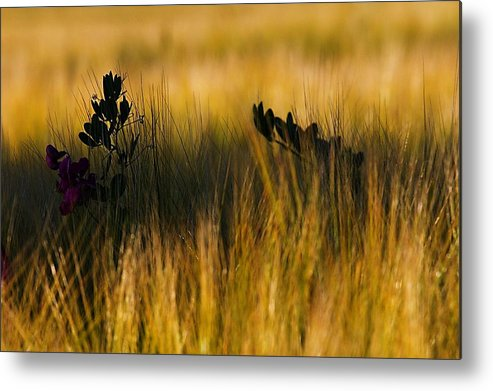 Field Metal Print featuring the photograph Field by Michal Stosel