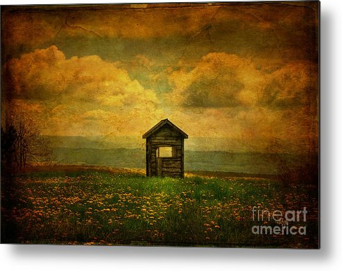 Shed Metal Print featuring the photograph Field Of Dandelions by Lois Bryan