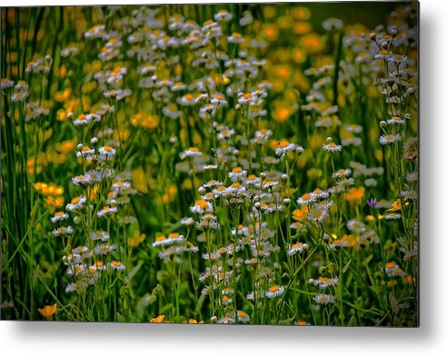 Flowers Metal Print featuring the photograph Field Of Flowers by Carolyn Ricks