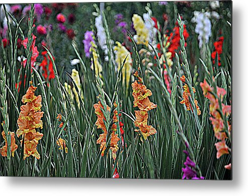 Flower Metal Print featuring the photograph Field Of Flowers by Mike Martin