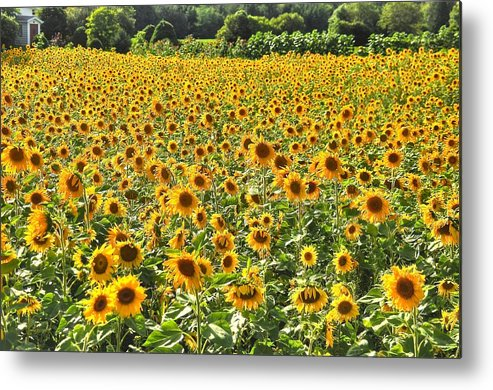Landscape Metal Print featuring the photograph Field Of Smiles by Joanna DeCesare