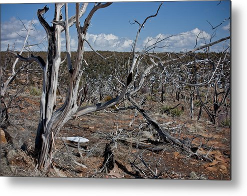 Mesa Metal Print featuring the photograph Fire Damage by Claus Siebenhaar