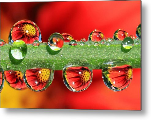 Water Drops Metal Print featuring the photograph Firey Drops by Gary Yost