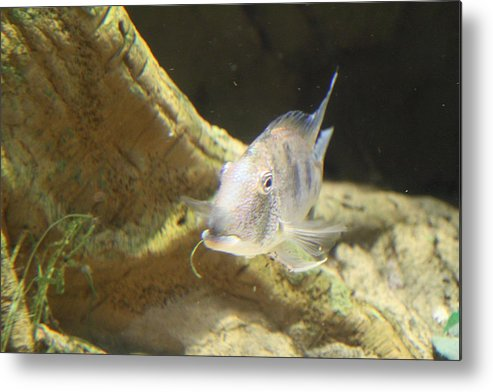Inner Metal Print featuring the photograph Fish - National Aquarium In Baltimore Md - 121248 by DC Photographer