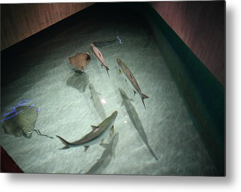 Inner Metal Print featuring the photograph Fish - National Aquarium In Baltimore Md - 121283 by DC Photographer