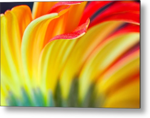 Nature Metal Print featuring the photograph Flames by Joan Herwig