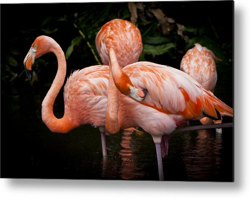 Flamingo Metal Print featuring the photograph Flamingo by Andrea Floyd