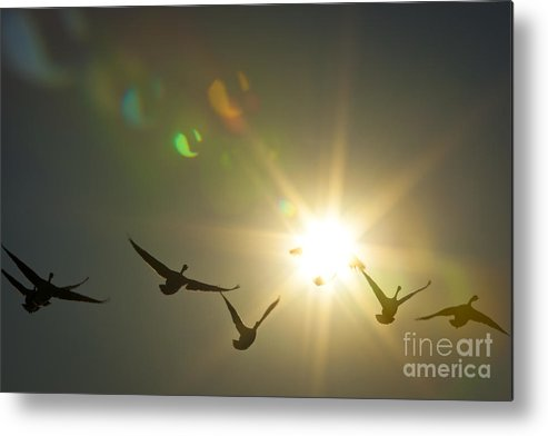 Sun Metal Print featuring the photograph Flare Or Fowl by Roger Bailey