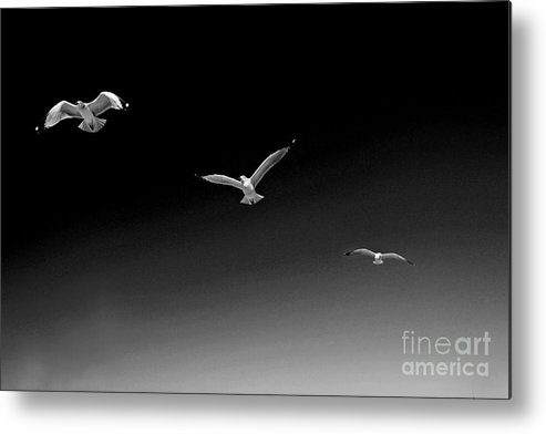 Landscape Metal Print featuring the photograph Flight Pattern Viii by Earl Johnson