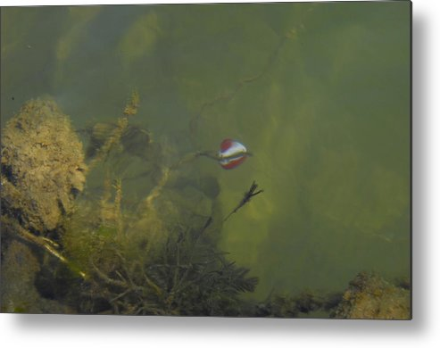 Metal Print featuring the photograph Float by Ricky Cerda