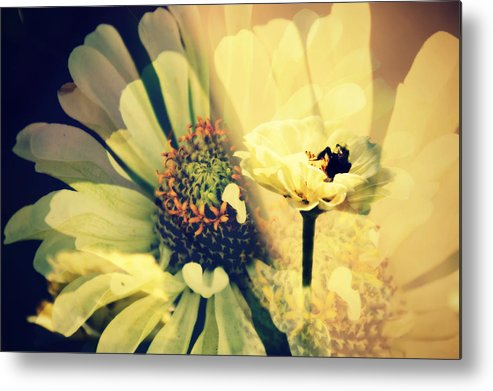 Flower Metal Print featuring the photograph Floral Beauty by Alice Gipson