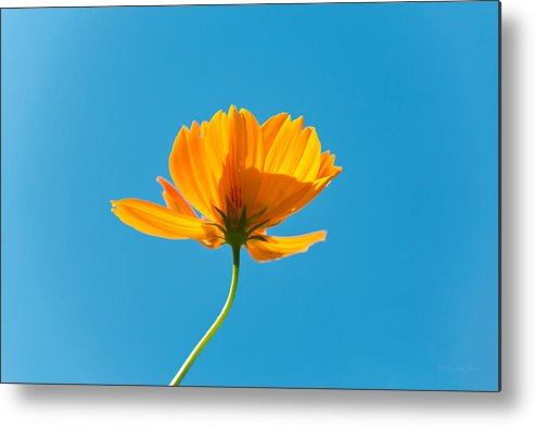 Orange Metal Print featuring the photograph Flower - Growing Up In Brooklyn by Mike Savad