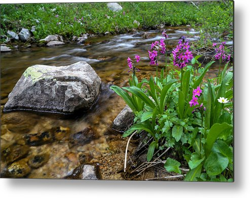 Stream Metal Print featuring the photograph Flowers And Stream by Kevin Buffington