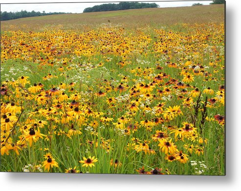 Flowers Metal Print featuring the photograph Flowers Gone Wild by Randy Shellenbarger