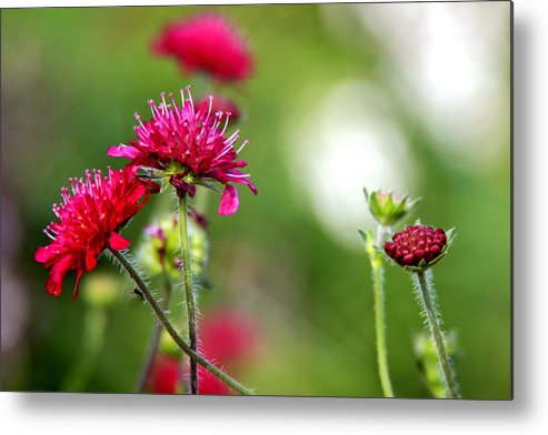 Flowers Metal Print featuring the photograph Flowers Intwined by Jillian Barrile