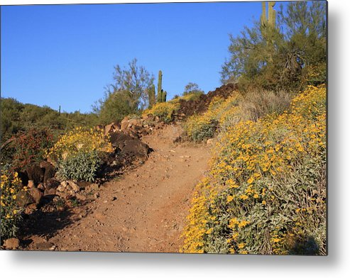 Landscape Metal Print featuring the photograph Follow The Trail by Doris Stafford