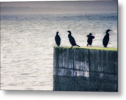 Cormorant Metal Print featuring the photograph Four Point Lookout by Mark Callanan