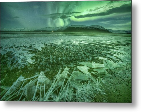 Green Metal Print featuring the photograph Fragile Beauty by Peter Svoboda, Mqep