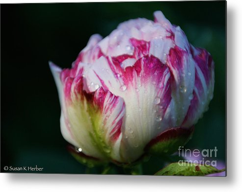 Flower Metal Print featuring the photograph Fresh New Beginnings by Susan Herber