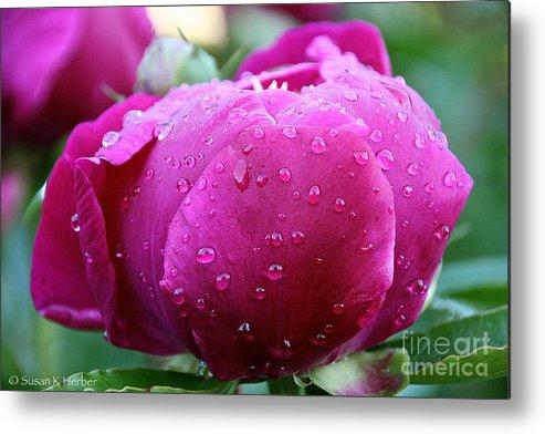 Flower Metal Print featuring the photograph Fresh Rain by Susan Herber