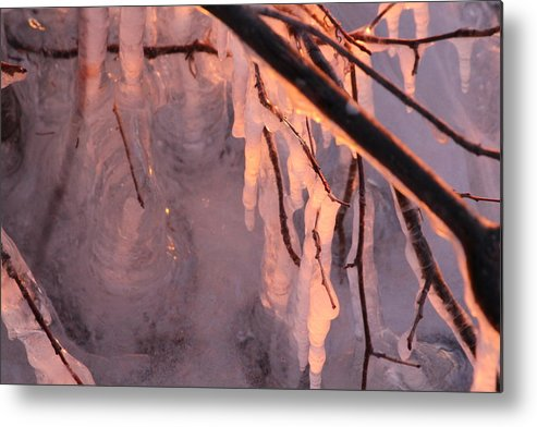 Metal Print featuring the photograph Frozen Branch by Kelly Grover