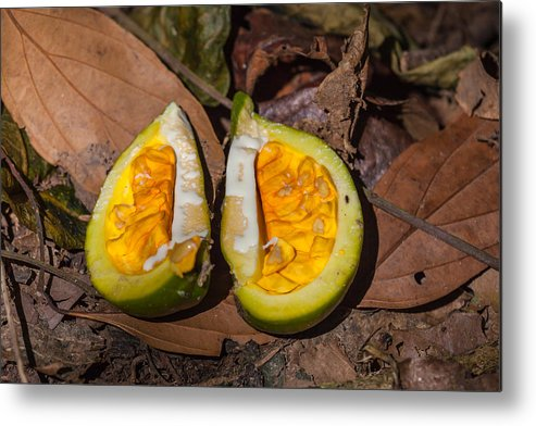 Fruit Metal Print featuring the photograph Fruit On The Forest Floor by Craig Lapsley