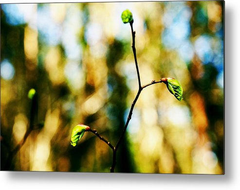 Spring Metal Print featuring the photograph Full Of Life 6 by Yevgeni Kacnelson