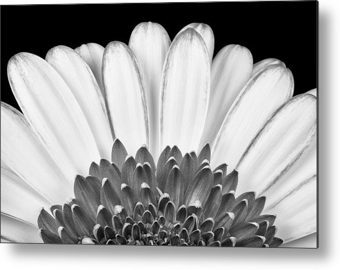 3scape Photos Metal Print featuring the photograph Gerbera Rising by Adam Romanowicz