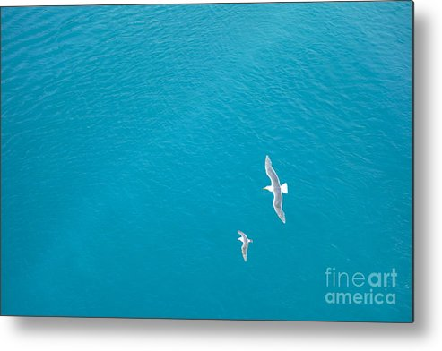 Birds Metal Print featuring the photograph Gliding Seagulls by Jacqueline Athmann