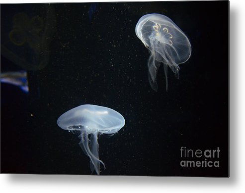 Jellyfish Metal Print featuring the photograph Glow In The Dark by Edna Weber