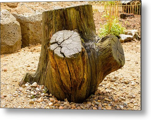 Tree Metal Print featuring the photograph Gnarly Stump by Mair Hunt