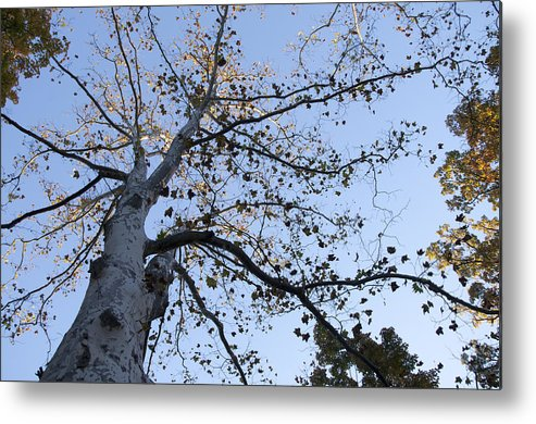 Go Climb A Tree Metal Print featuring the photograph Go Climb A Tree by Bill Cannon