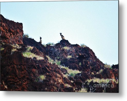 Farel Goats Metal Print featuring the photograph Goats Watching Me by Craig Wood