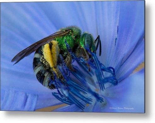 Birds Metal Print featuring the photograph Green Bee Blue Moment by Sheen Watkins