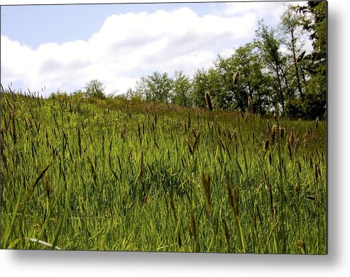 Nature Metal Print featuring the photograph Green Hill by Nelson Falker