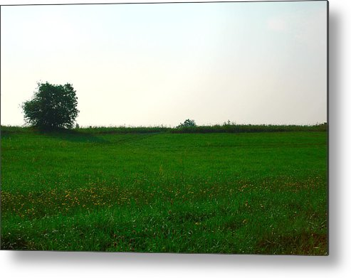 Meadow Metal Print featuring the photograph Green Meadow by Eduard Isakov